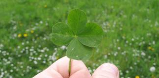 Numeros de la suerte