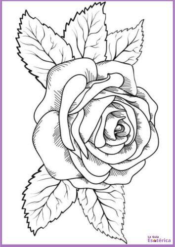 Mandala de rosa para pintar