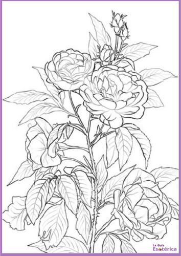 Mandala de rosas para colorear